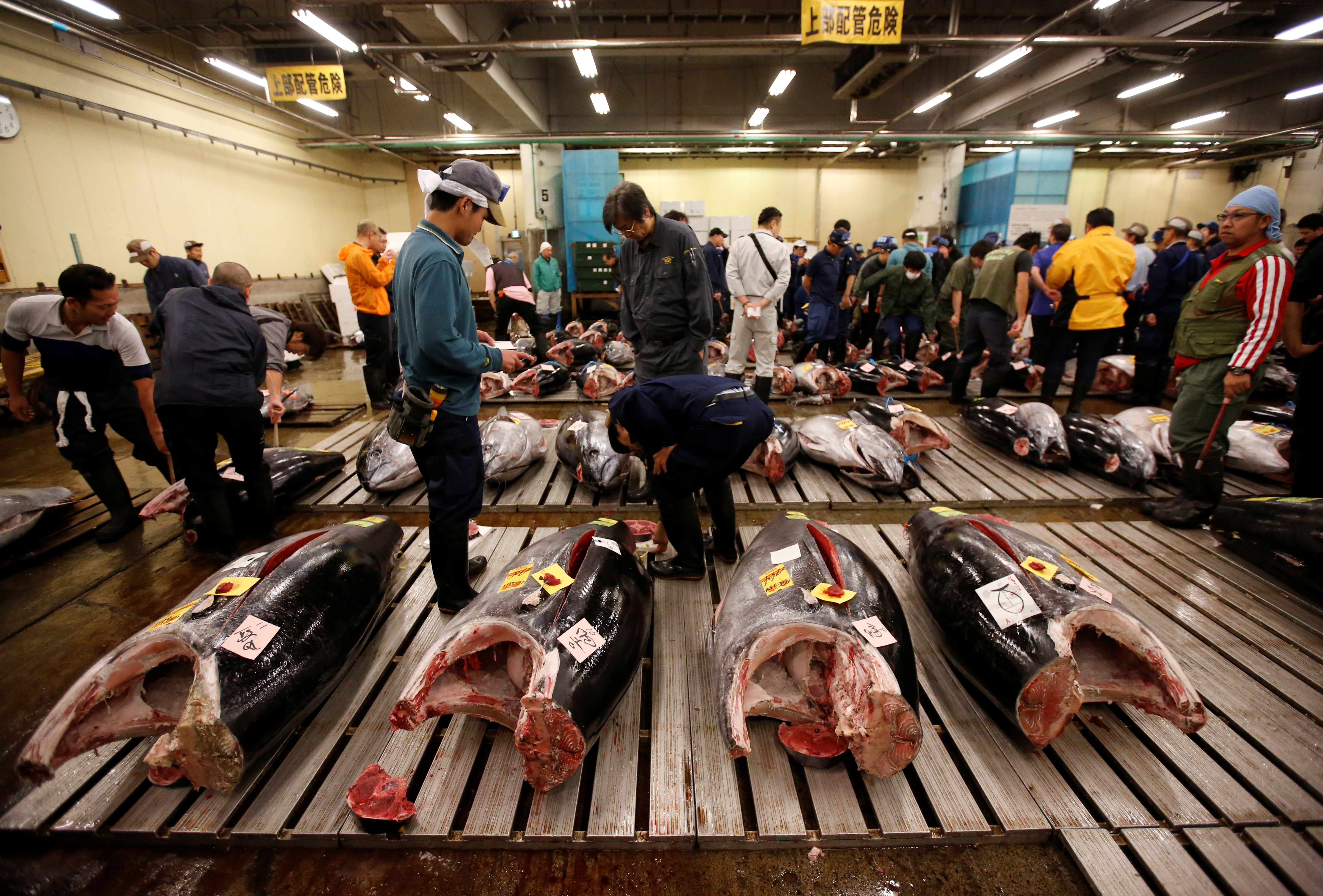 Wholesalers check the quality of fresh tuna fish at the Tsukiji fish market in Tokyo, Japan, Sept. 29, 2018.
