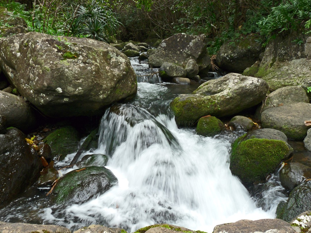 Limahuli Stream is one of the few pristine waterways left in the Hawaiian Islands.