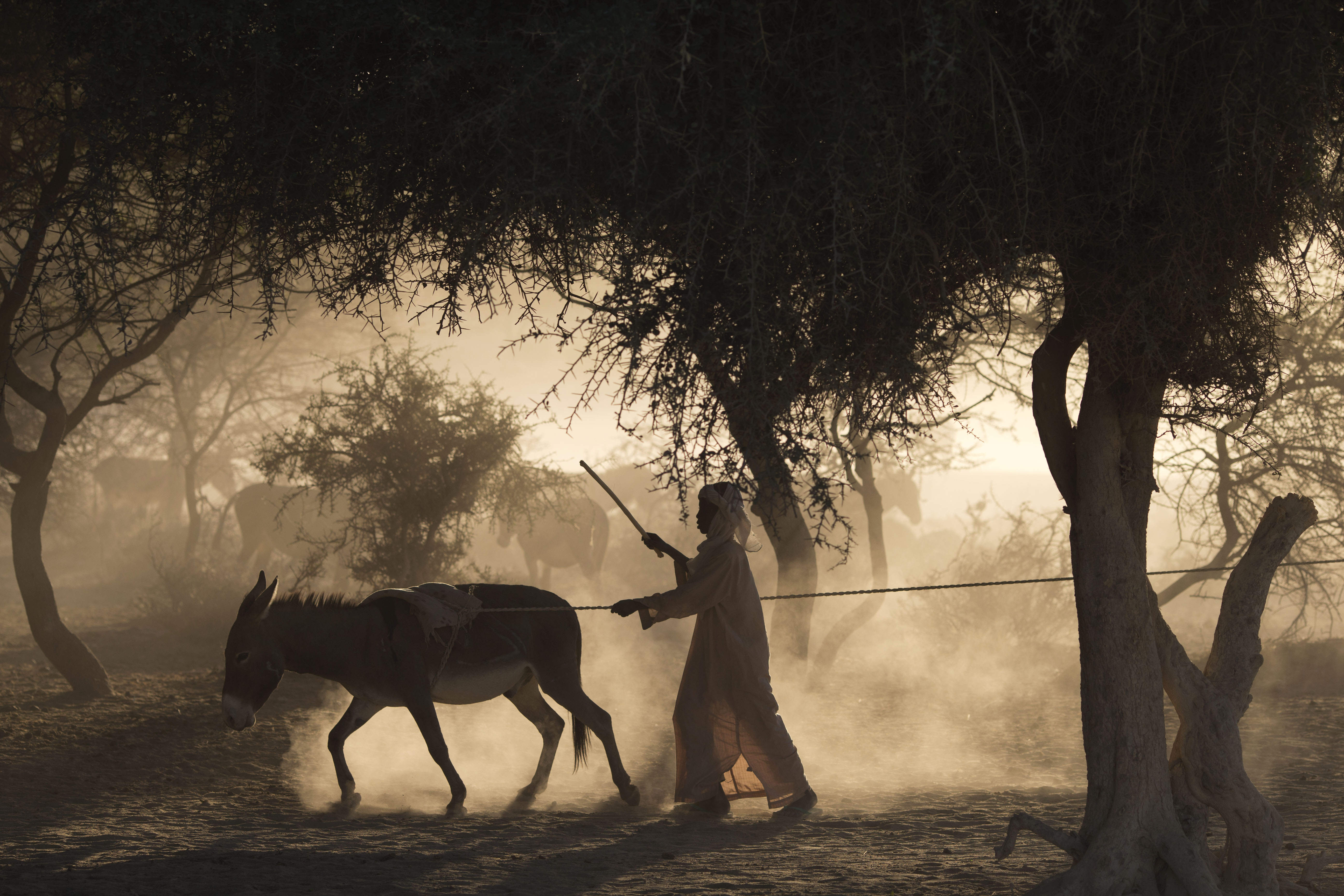 In this Nov. 2, 2012 photo, a boy drives a donkey to pull water up from a well outside Louri village in Chad in the Sahel.