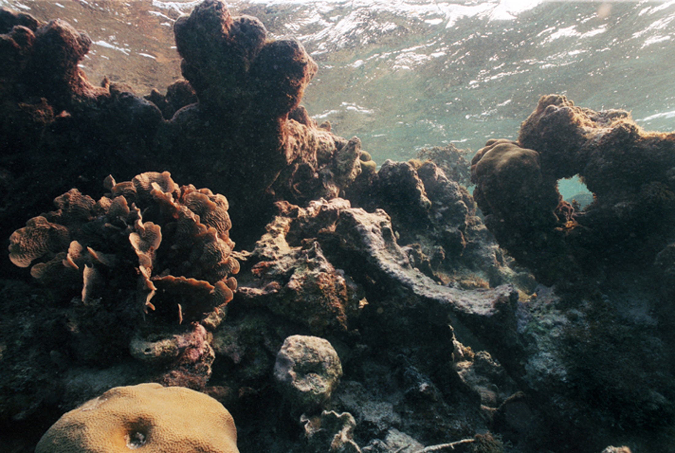 FILE - An undated photo shows the effect of bleaching on coral off Caye Caulker, Belize.