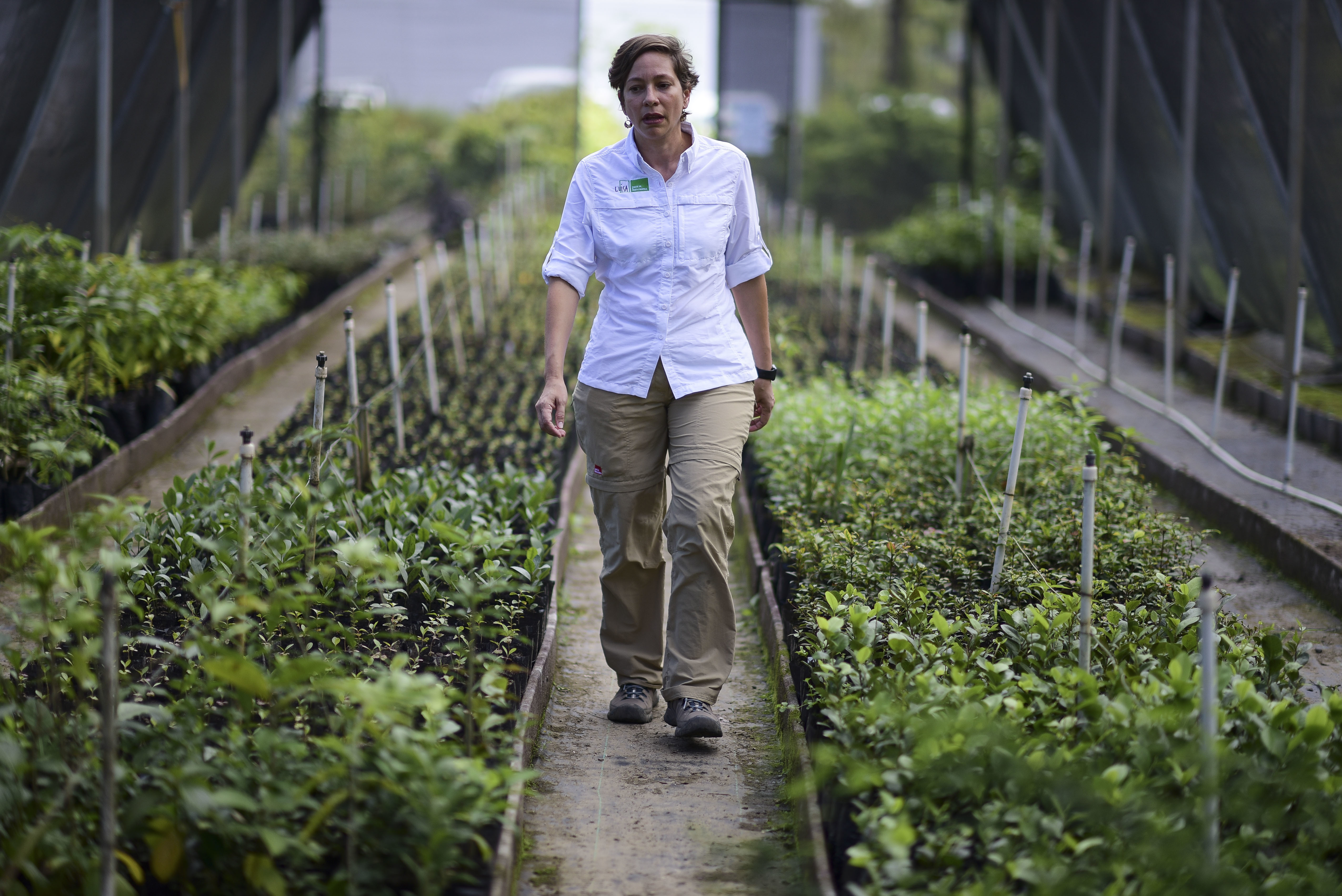 "Luisa Rosado Seijo, manager of the ecological recovery program developed by Para la Naturaleza, a nonprofit organization, tours one of the NGO's nurseries in the in Rio Piedras Botanical Garden, in San Juan, Puerto Rico. ""This is a project where we ..."
