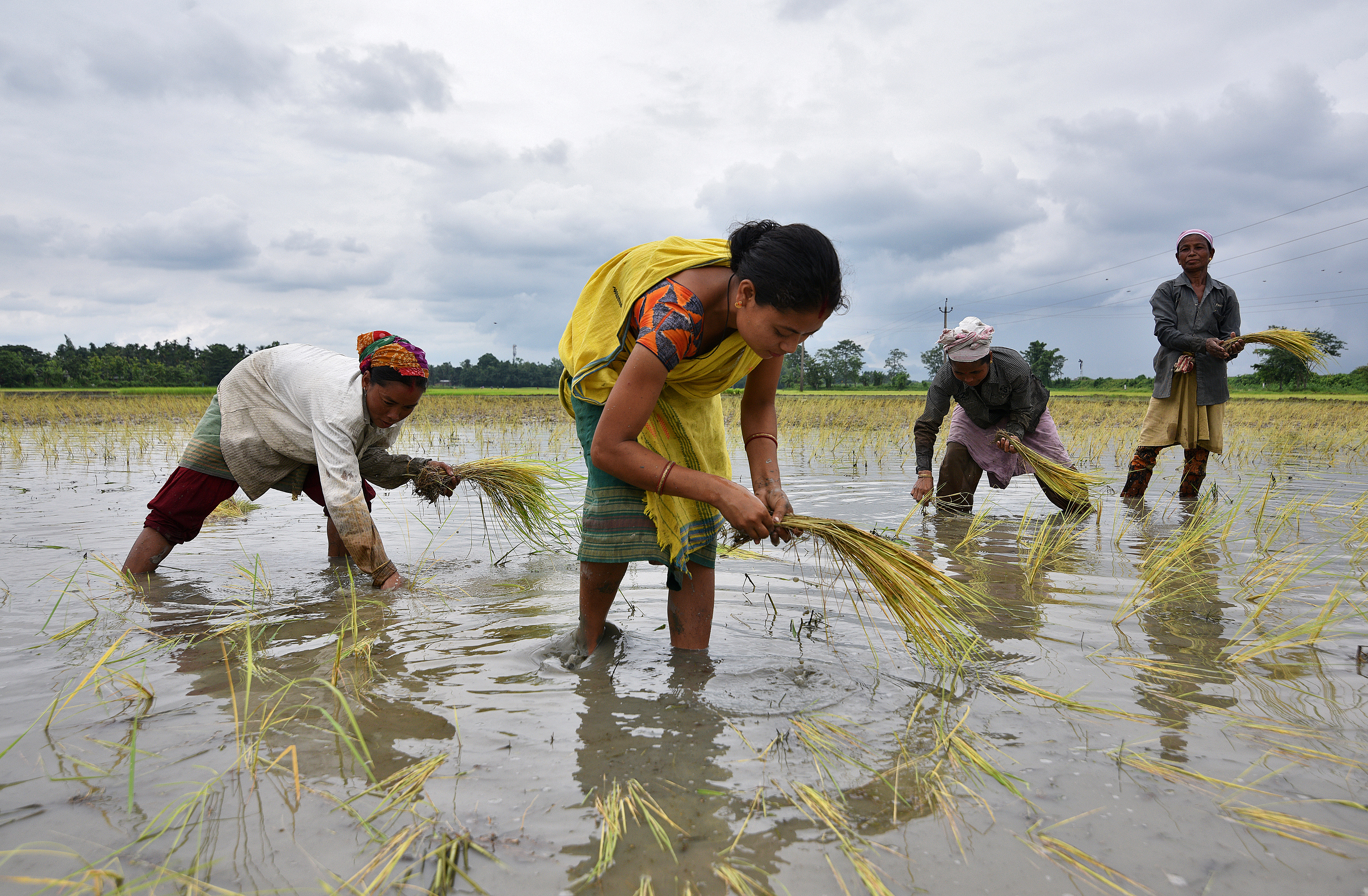 FILE - Women plant rice saplings at a paddy field in a village in Nagaon district, in the northeastern state of Assam, India, July 3, 2018.