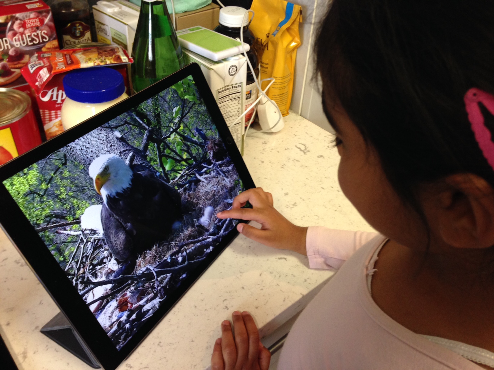 Sophia Panchal, 4, checks out a baby eagle on a live-streaming eagle cam, March 2016.