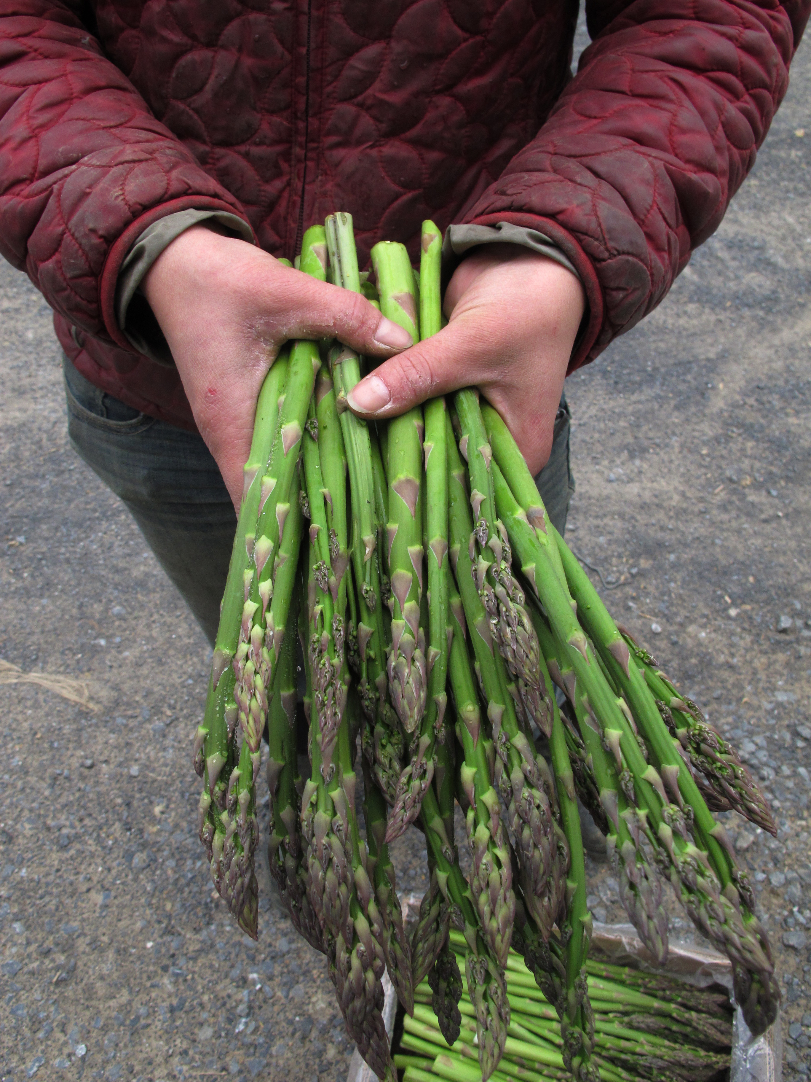 FILE - Laura Zaino, farm manager at Greenmoore Gardens in Port Matilda, Pa., holds freshly picked asparagus to be distributed to the farm's community-supported agriculture customers, May 13, 2013.