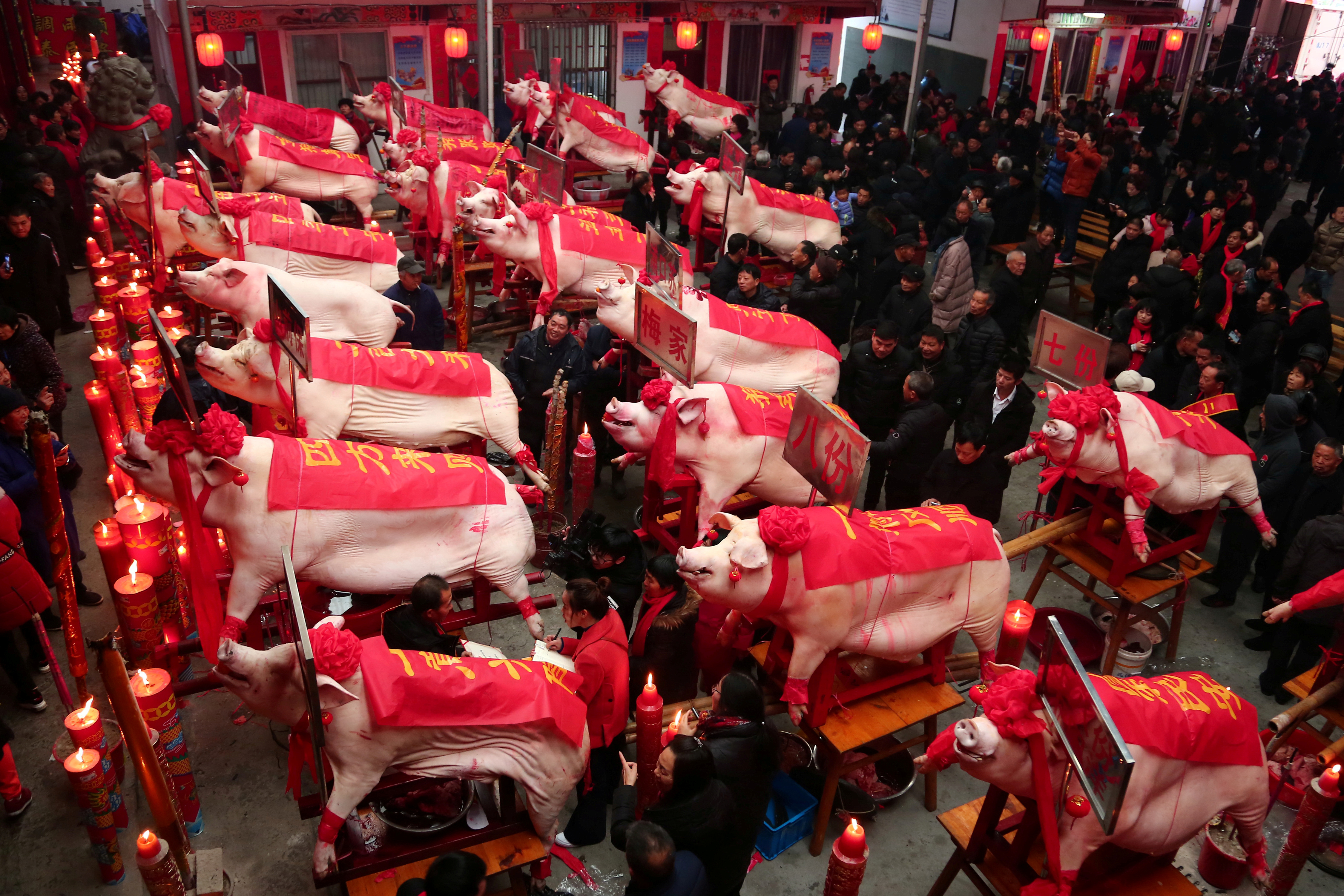 Slaughtered pigs are on display at a heaviest pig contest on the eighth day of the Chinese Lunar New Year of the pig, in Taizhou, Zhejiang province, China, Feb. 12, 2019.