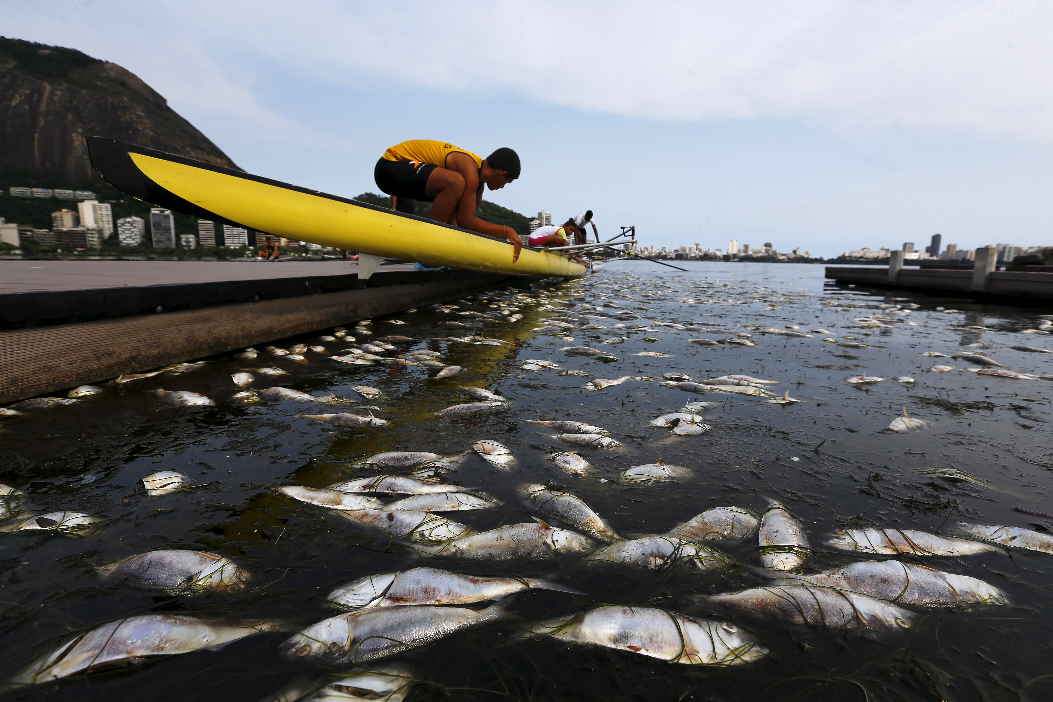 Dead fish are pictured next to a rowing athlete as he puts his boat on the water before a training session at the Rodrigo de Freitas lagoon, in Rio de Janeiro April 13, 2015.