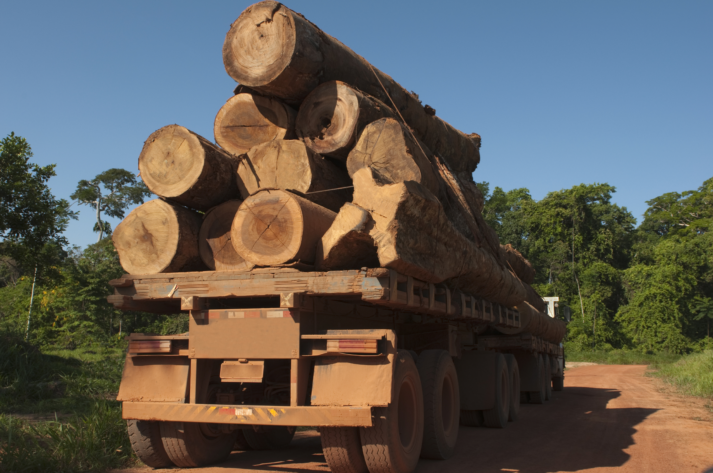 Billions of Dollars Lost Each Year to Illegal Logging ...