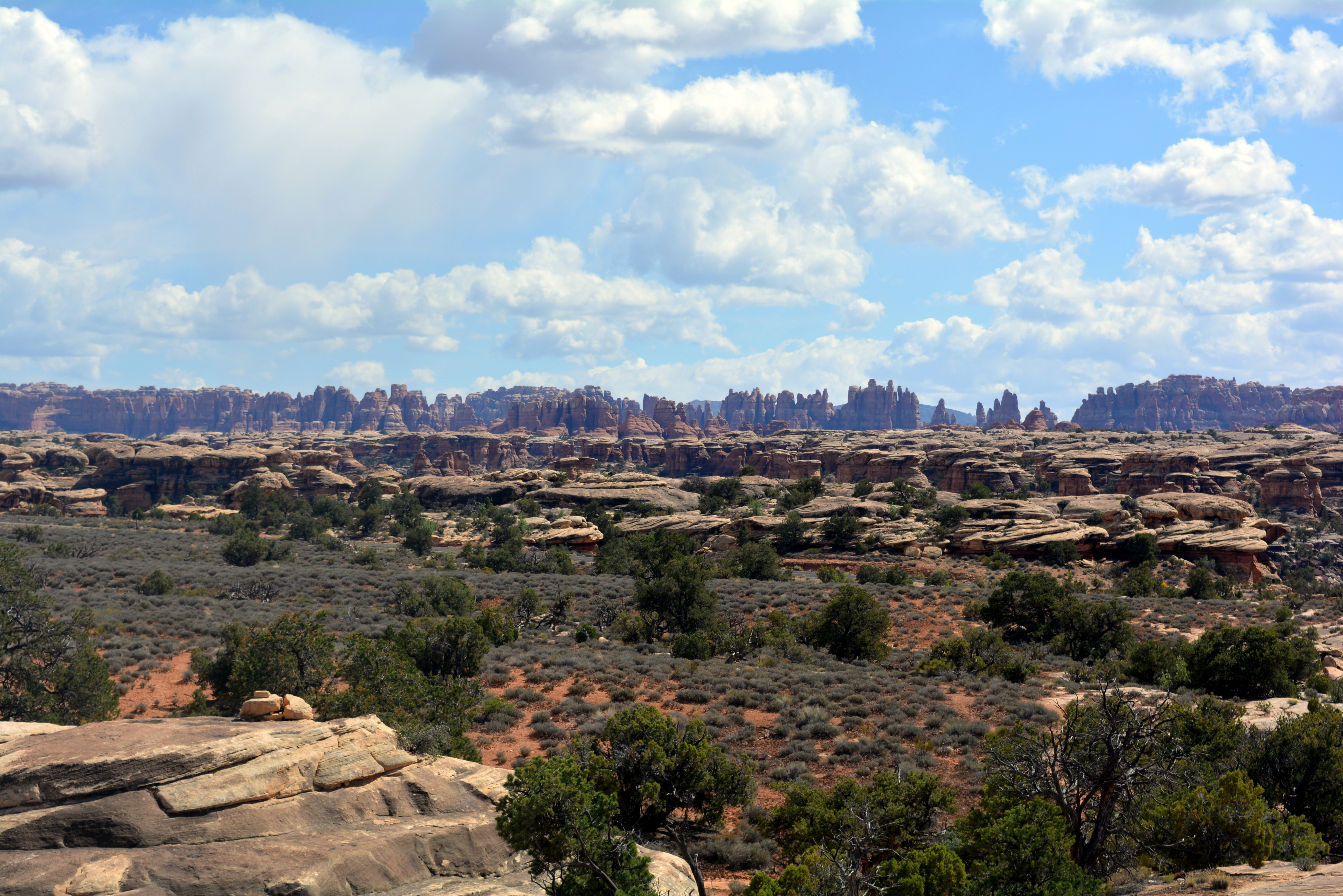 In The Needles district of Canyonlands National Park, spires of Cedar Mesa Sandstone rise hundreds of meters above a network of canyons and grasslands.