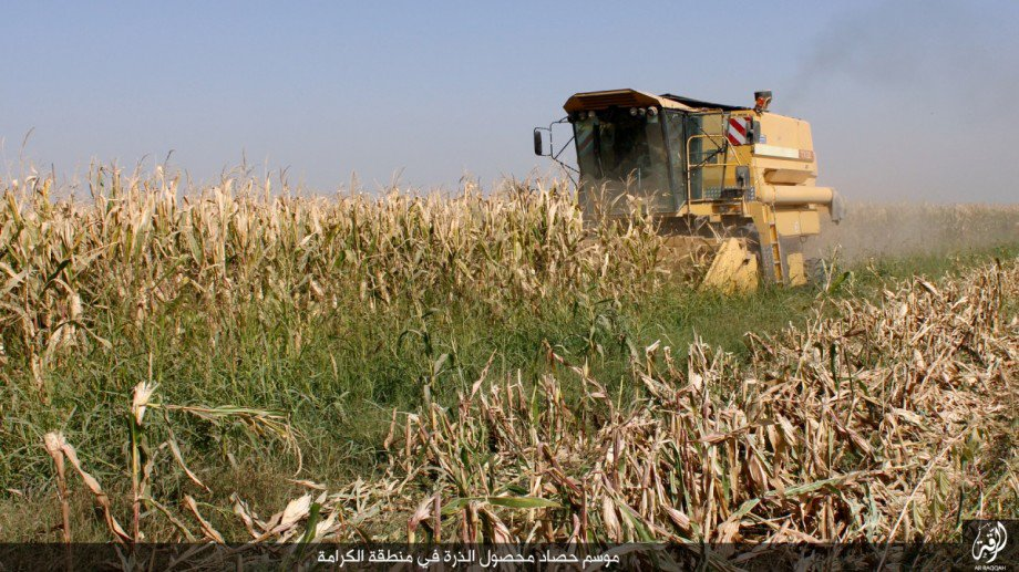 FILE - Corn is harvested in a field outside Raqqa, Syria, under Islamic State control, Oct. 23, 2016. (Credit: Dawa al-Haq)