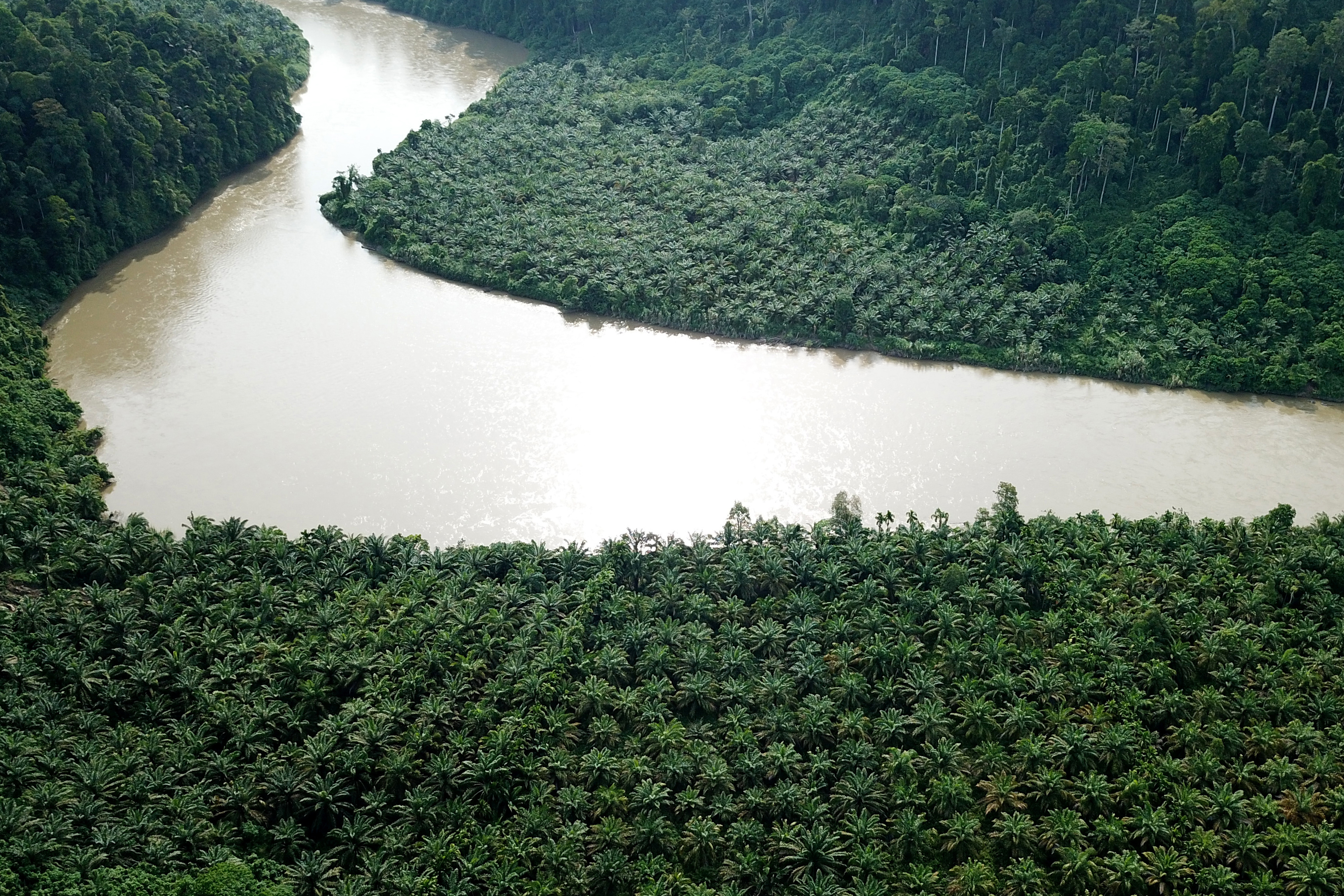 This aerial picture taken Nov. 1, 2018, shows an illegally planted oil palm estate in the protected Gunung Leuser National Park in Aceh.