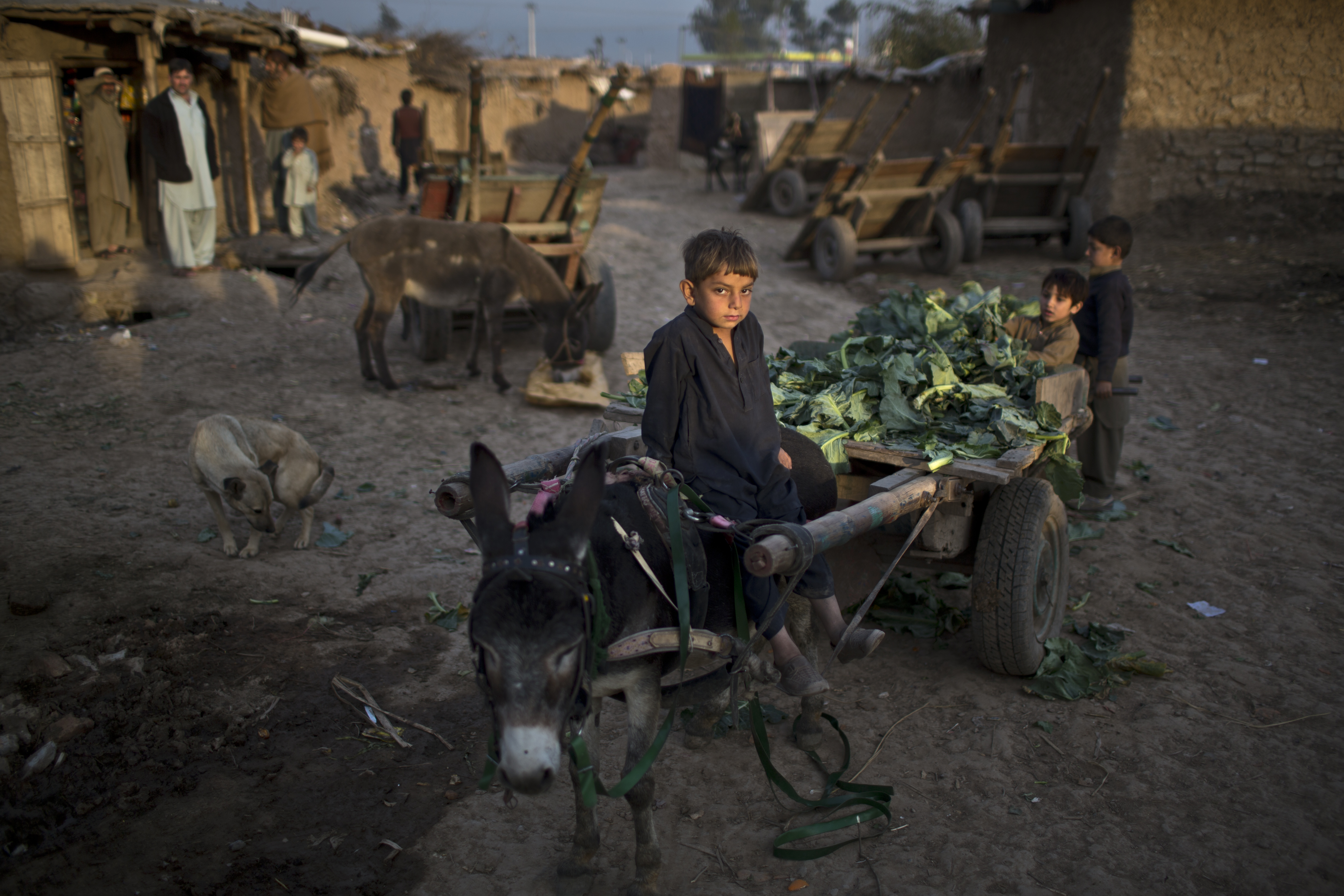 FILE - An Afghan refugee boy sits on a donkey attached with a cart loaded with vegetable leaves collected off the ground of a near by market, in a slum on the outskirts of Islamabad, Pakistan, Feb. 10, 2015.