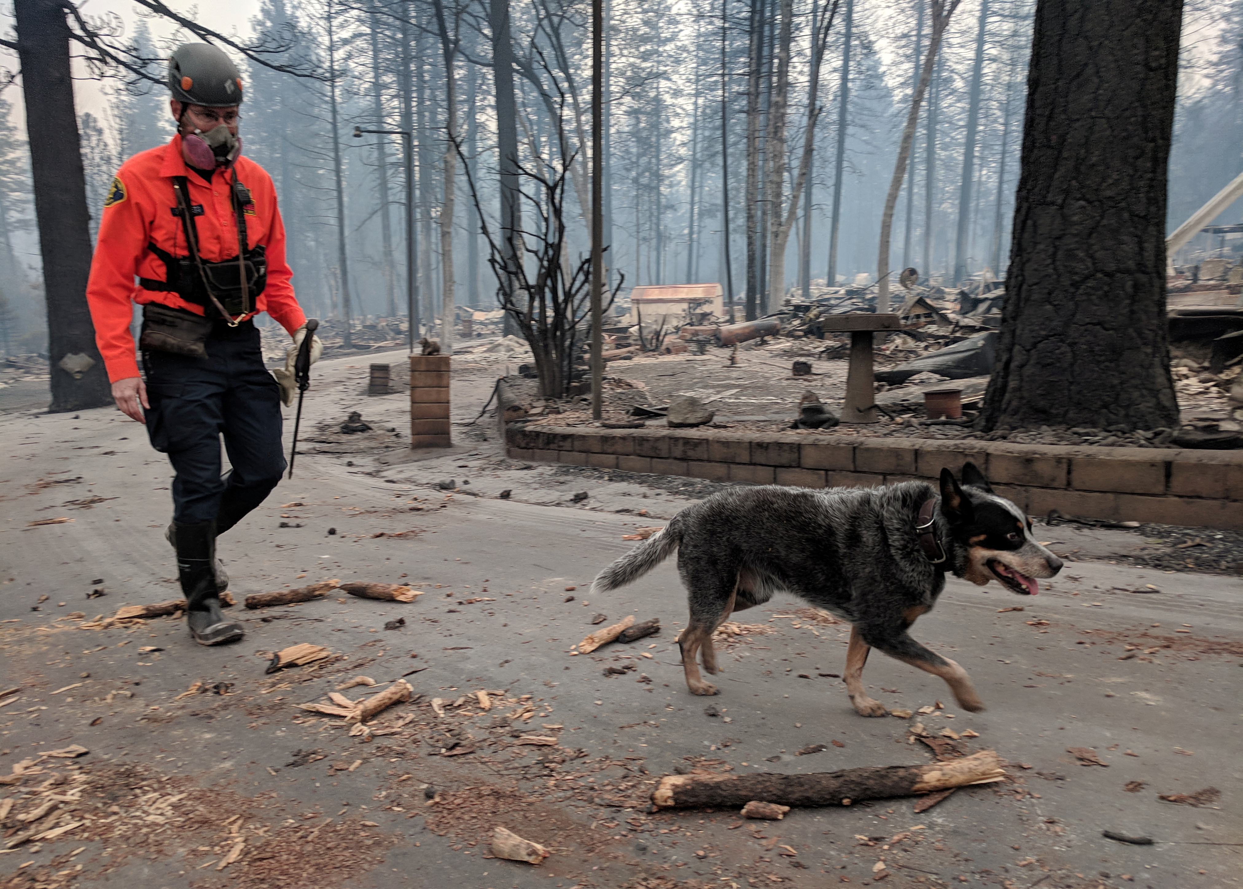 A cadaver dog and his handler search for victims in a burnt-out residential street ravaged by the Camp Fire in Paradise, California, Nov. 13, 2018.
