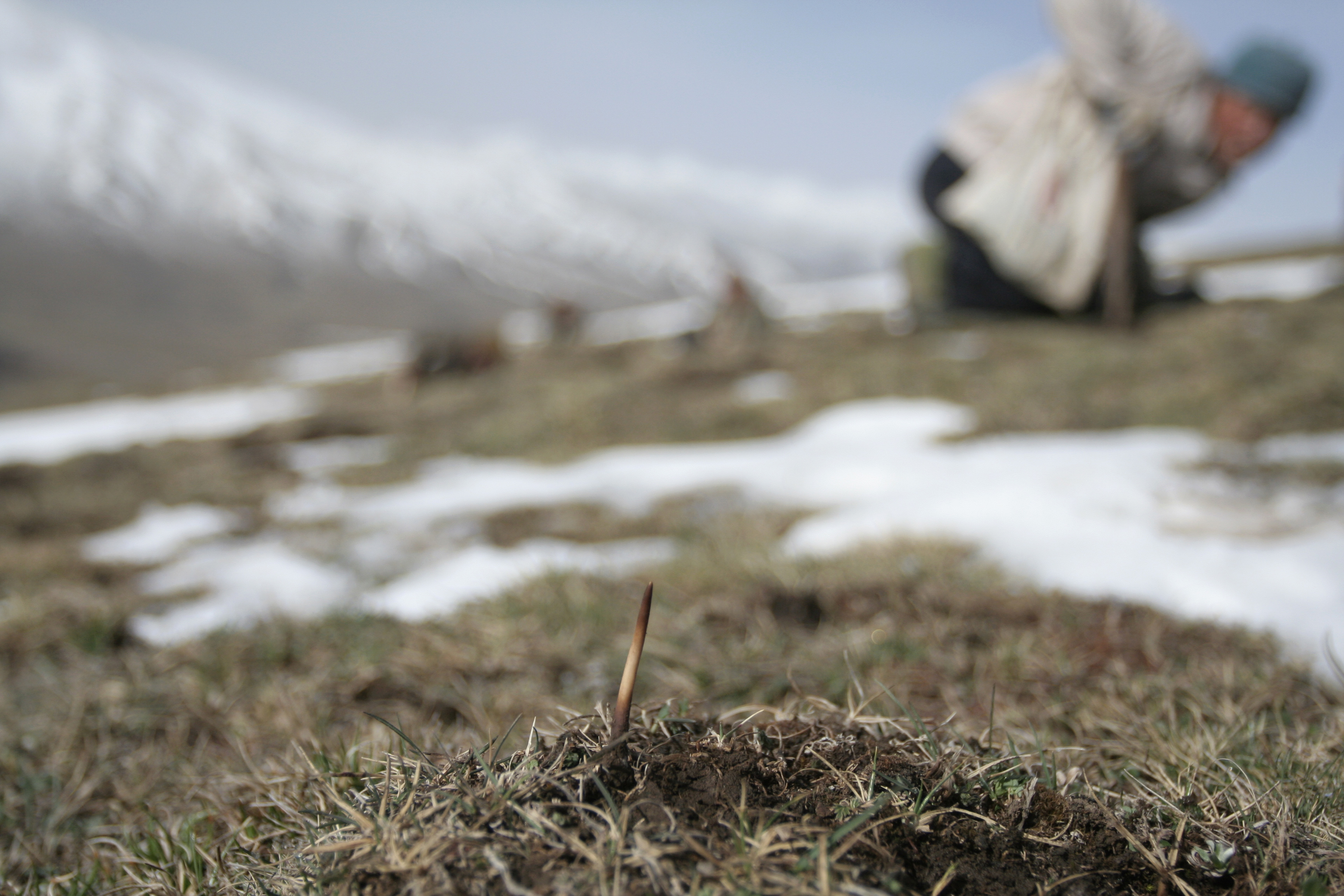 Political Motives Seen in Beijing's Warning on 'Himalayan