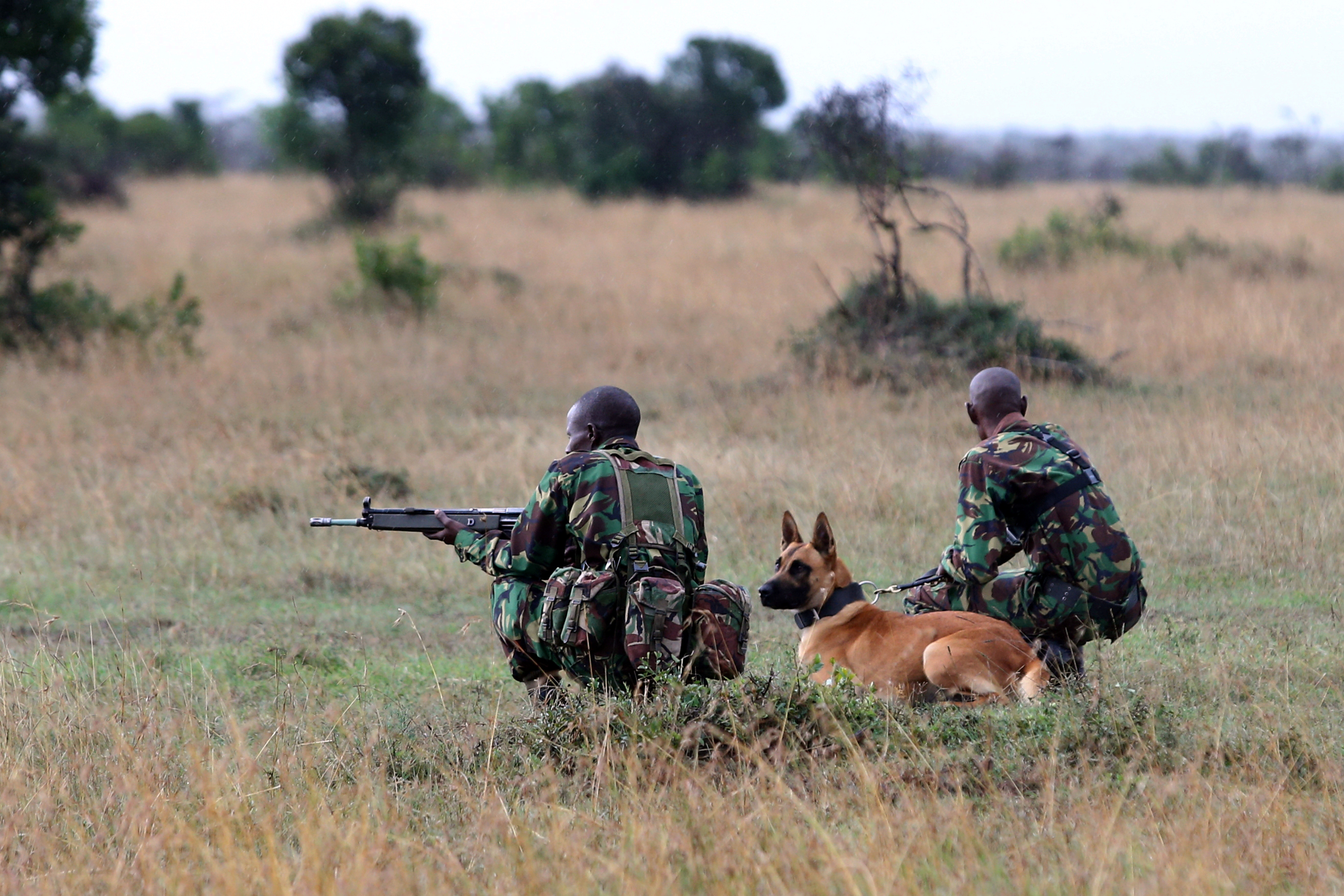 A special unit of wildlife rangers demonstrate an anti-poaching exercise ahead of the Giants Club Summit of African leaders and others on tackling poaching of elephants and rhinos, Ol Pejeta conservancy near the town of Nanyuki, Laikipia County, Keny...