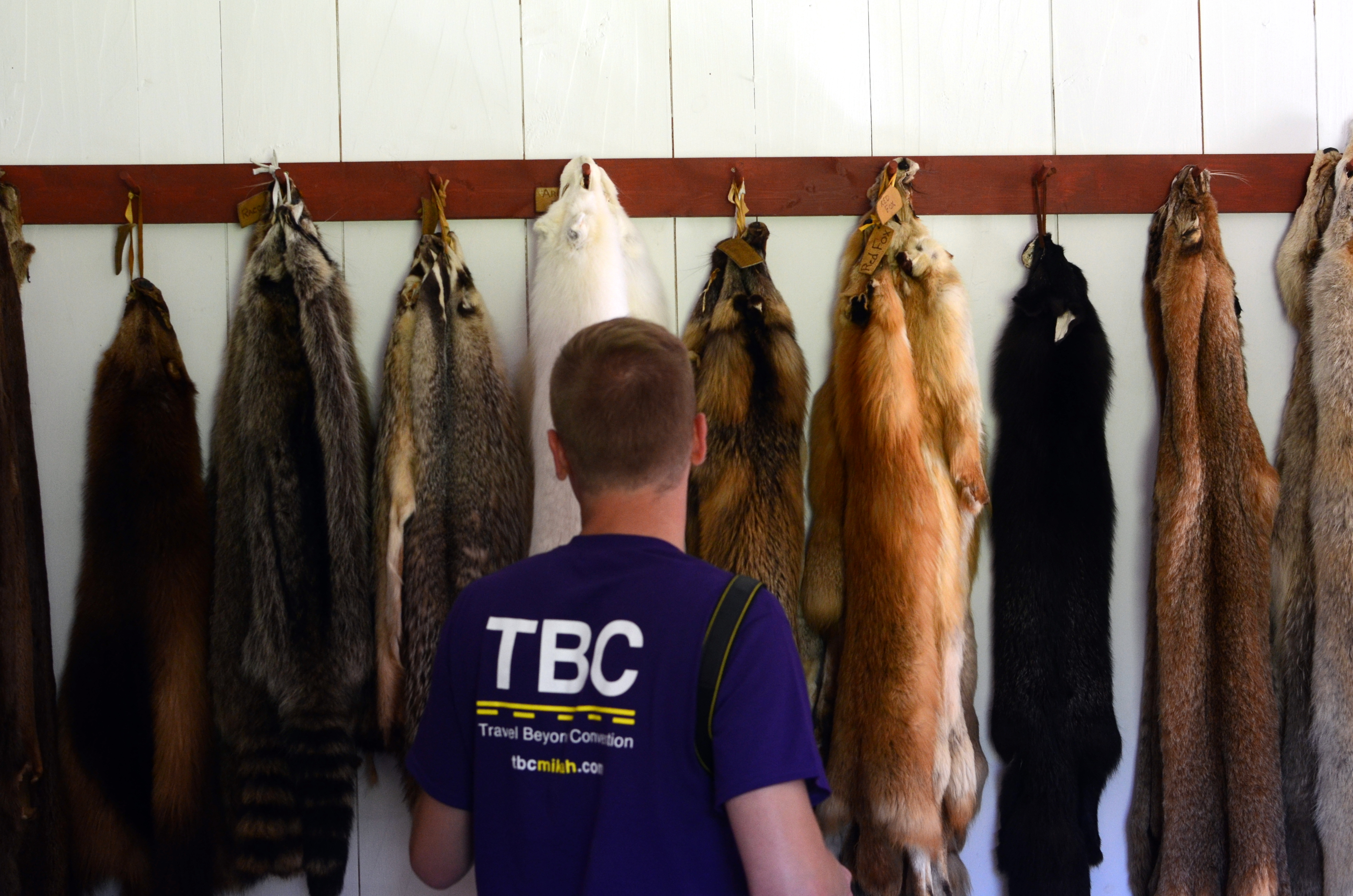 Mikah Meyer checks out a variety of animal pelts at the Grand Portage National Monument in Minnesota. They are (from left) wolverine, raccoon, badger, arctic fox, cross fox, red fox, silver fox, bobcat and coyote.