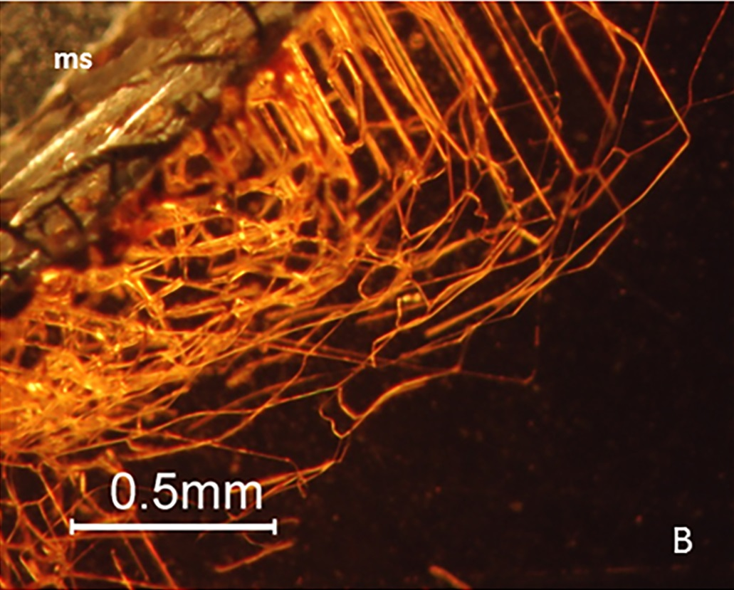 This image is a microphotograph of the network of tubular structures originating at the garnet's surface. (Photo courtesy of Ivarsson et al, 2018)