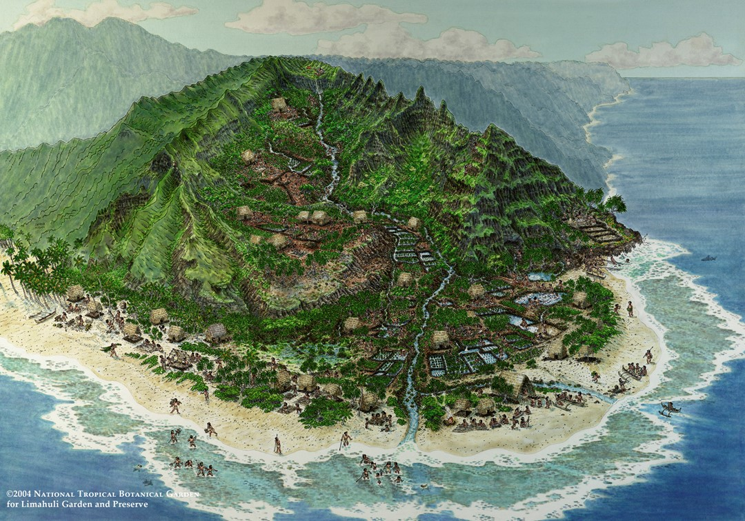 Artist's depiction of what the area around Limahuli might have looked like many years ago.