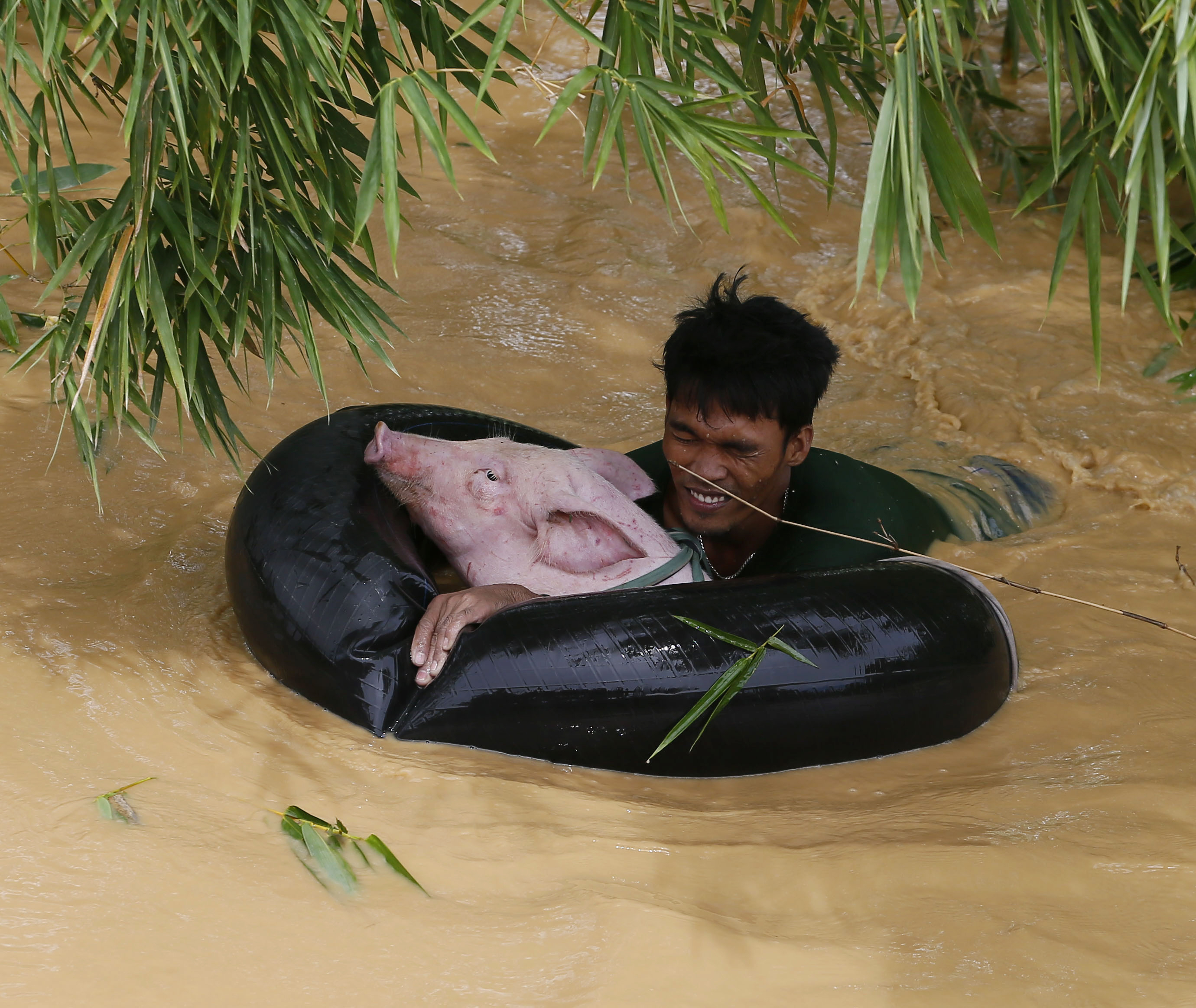 A resident uses an inflated tire interior to bring a pig to safety amidst raging floodwaters brought about by Typhoon Koppu at Zaragosa township, Nueva Ecija province, north of Manila, Philippines Monday, Oct. 19, 2015.
