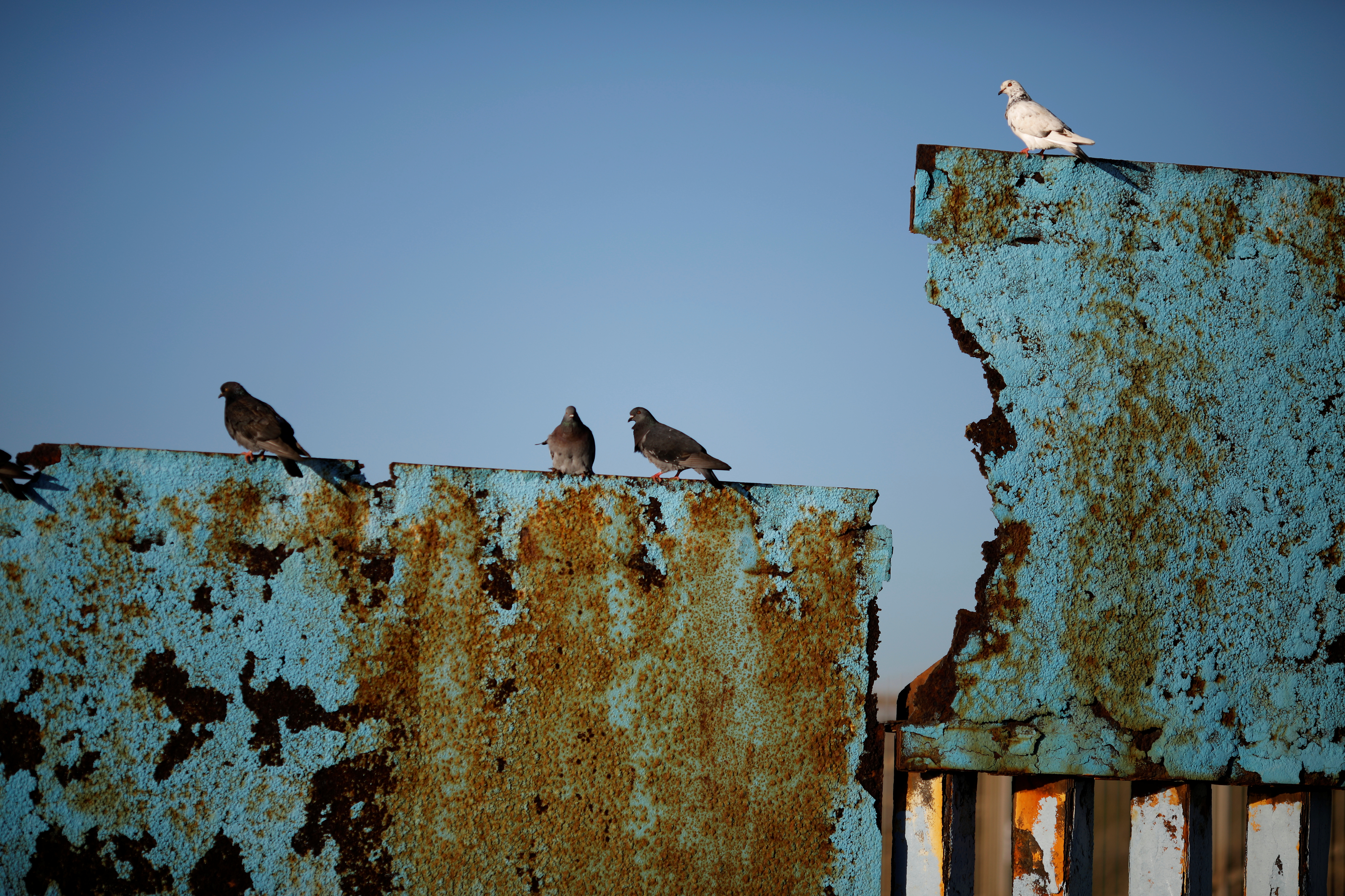 Birds are seen on a section of the border fence between United States and Mexico in Tijuana, Mexico December 15, 2018.
