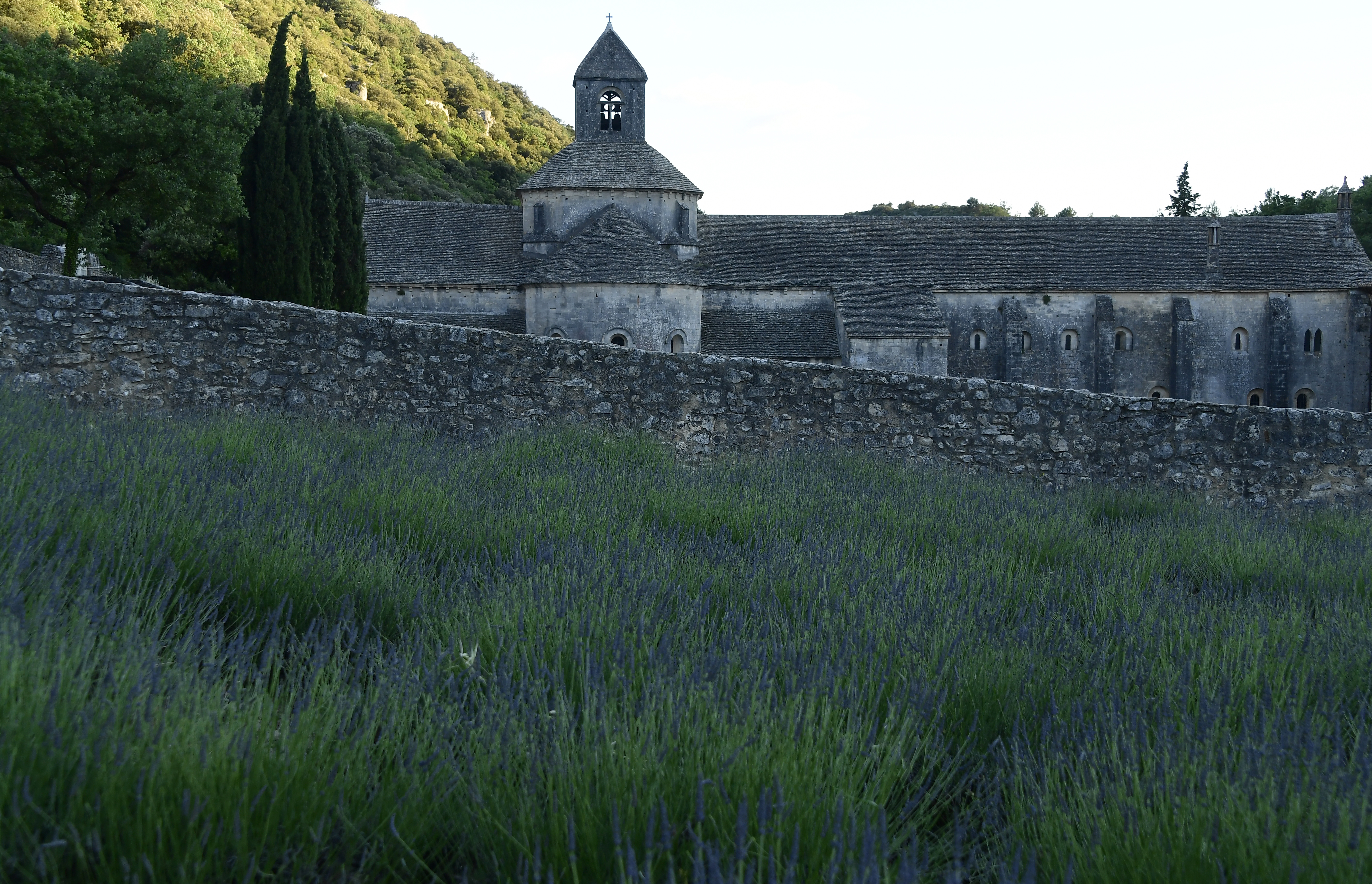 FILE - A field of lavender is pictured in front of the abbey Notre Dame de Senanque, southern France, June 19, 2016.