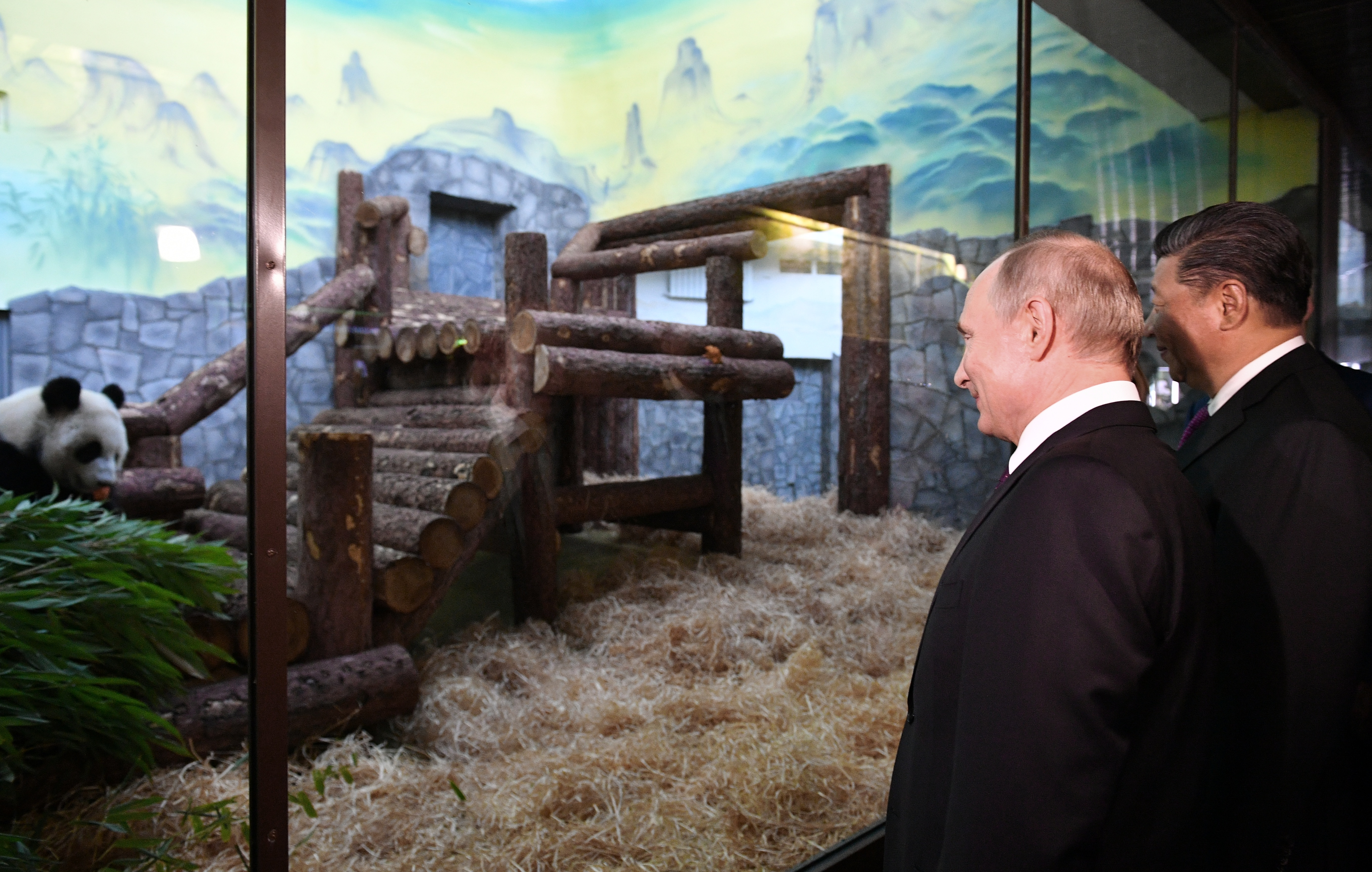 Russian President Vladimir Putin and his Chinese counterpart, Xi Jinping, attend a welcoming ceremony for two Chinese giant pandas, male Ru Yi and female Ding Ding, at the Moscow Zoo on June 5, 2019.