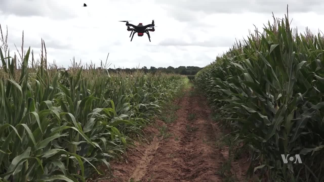 Drones Can Help Farmers Grow Better Crops | Voice of America - English