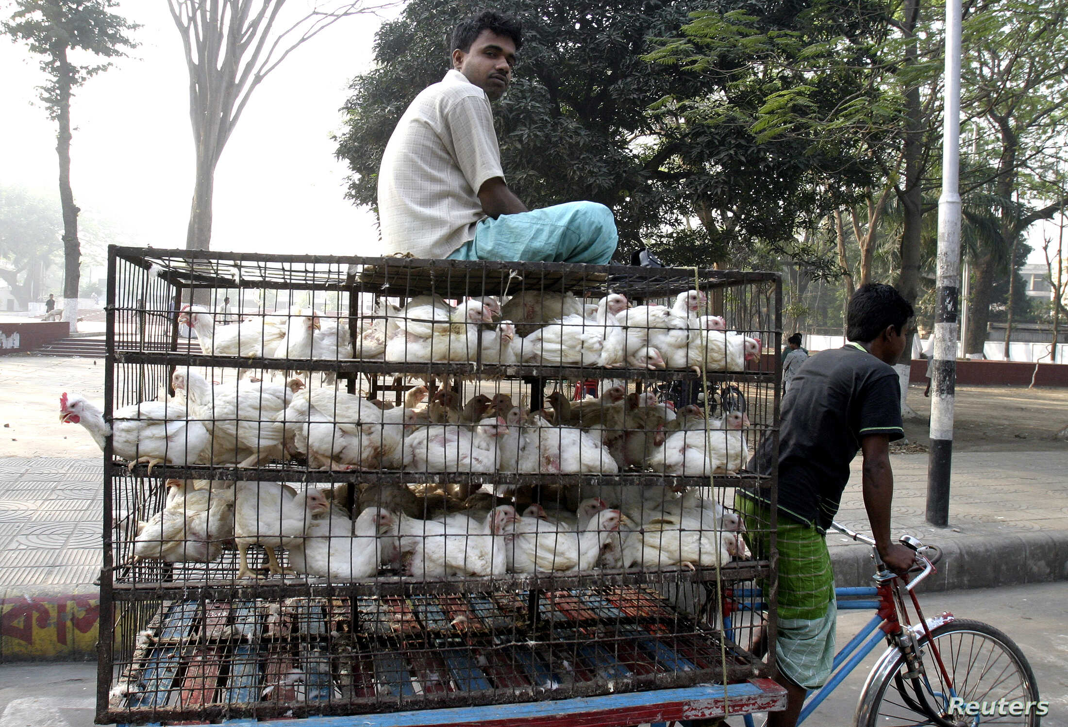 FILE - A Bangladeshi vendor carries chickens on a rickshaw to a market in Dhaka, March 29, 2007. The United Nations is educating farmers on the growing resistance of deadly diseases to antimicrobial drugs such as antibiotics.