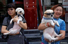 Animal activists hold a dog (R) which was rescued from a dog meat trader and a rescued stray dog, before their gathering against Yulin Dog Meat Festival in Beijing, China, June 10, 2016