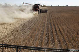 FILE - Soybean plants are harvested at a field in the city of Chacabuco, Argentina, April 24, 2013.