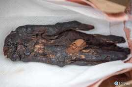 Ancient Mummified Hand Recovered During ICE HSI's Operation Mummy's Hand. Photo courtesy U.S. Immigration and Customs Enforcement