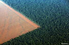 The Amazon rain forest (R), bordered by deforested land prepared for the planting of soybeans, is pictured in this aerial photo taken over Mato Grosso state in western Brazil, October 4, 2015.
