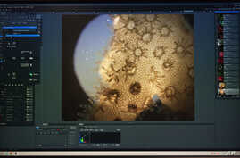 FILE - Living coral is shown under a microscope at the Hawaii Institute of Marine Biology on Coconut Island, Hawaii, Sept. 28, 2015.