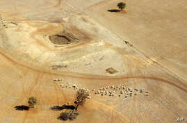 FILE** In this July 13, 2002 file photo, sheep wonder parched land near a dry reservoir on a Condobolin property, 460 kilometers (285 miles) northwest of Sydney, Australia.
