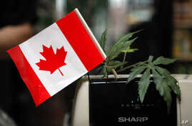FILE - A cash register is adorned with a Canadian flag and imitation marijuana leaves at the BC Marijuana Party Headquarters in Vancouver, British Columbia.