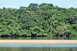 The Dzanga-Ndoki National Park and Dzanga-Sangha dense forest special reserve are located in the rainforest in the south-western part of the Central African Republic, Congo Basin. They comprise a total area of more than 4 000 km2 (more than 400 000 h