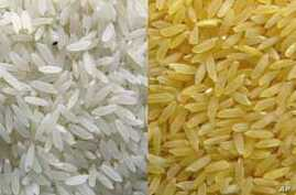 Hunger in Focus: Three Questions on Golden Rice
