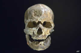 """FiLE - The 28,000-years-old skull of a Homo sapien called """"Cro Magnon,"""" found in Dordogne, France, is displayed during a press visit at Musee de l'Homme, in Paris, France, Oct. 14, 2015."""