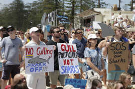 People hold placards during a protest against Western Australia's state government's shark killing policy on Manly beach in Sydney, Australia, Feb. 1, 2014.