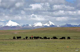 FILE - Tibetans graze their yak in the grasslands of the high Tibetan plateau in the county of Naqu, Tibet, China, Thursday July 6, 2006.