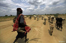 A shepherd from the Mundari tribe walks with cattle near Bor, Jonglei state, South Sudan,  March 31, 2012.
