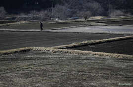 A man walks between fallow rice fields in Miyakoji in Tamura, Fukushima prefecture, April 1, 2014.