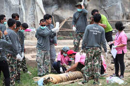 Thailand Rescuing Tigers From Tourist Spot
