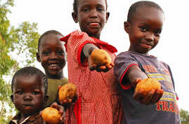 The FAO has released the first edition of its regional Overview of Food Insecurity in Africa. West Africa leads continent in progress.  (Credit: FAO)