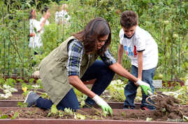 First Lady Michelle Obama helps a youngster harvest vegetables in the White House Kitchen Garden on October 6, 2016.