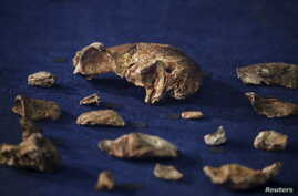 More than 1,500 bones from 15 individuals from a new human species called Homo naledi are found in a South Africa cave.