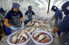 FILE - Workers process fillet from catfish in Ben Tre province, situated in the delta of the Mekong River in Vietnam.
