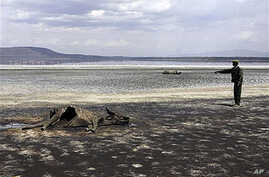 Kenya Wildlife Service warden Vincent Ongwae looks at the carcass of a buffalo that had died due to drought, on the shore of Lake Nakuru in Kenya, Oct 2009 (file photo)