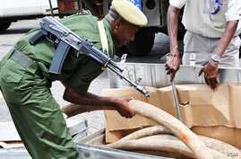 Some of the 2 tons of elephant ivory seized in Interpol's