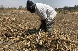 With rains expected in a few weeks time, a man in Harare (09/05/2018) prepares his land to plant corn.