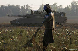 A labourer tends a watermelon field as tanks are stationed near the border with Gaza July 30, 2014. Israeli fire killed at least 43 Palestinians in the Gaza Strip early on Wednesday as the Jewish state said it targeted Islamist militants at dozens of